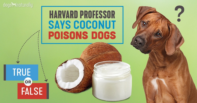 Dog next to coconut oil