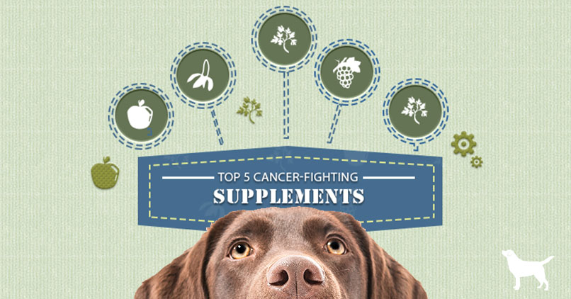 Dog looking at the top 5 cancer-fighting supplements