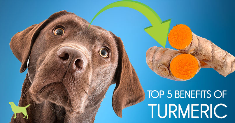 Turmeric For Dogs: 5 Surprising Health Benefits
