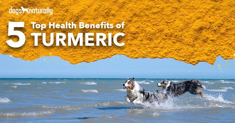 5 Top Health Benefits of Turmeric- Two dogs running at the beach