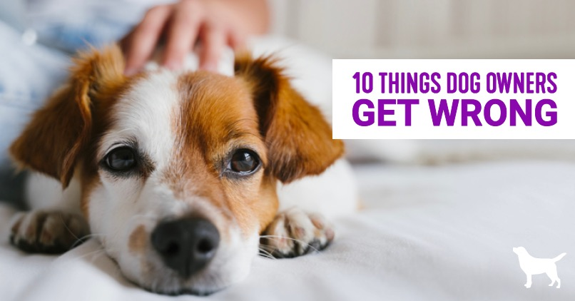 10 things dog owners get wrong- a puppy laying down with someone petting his head