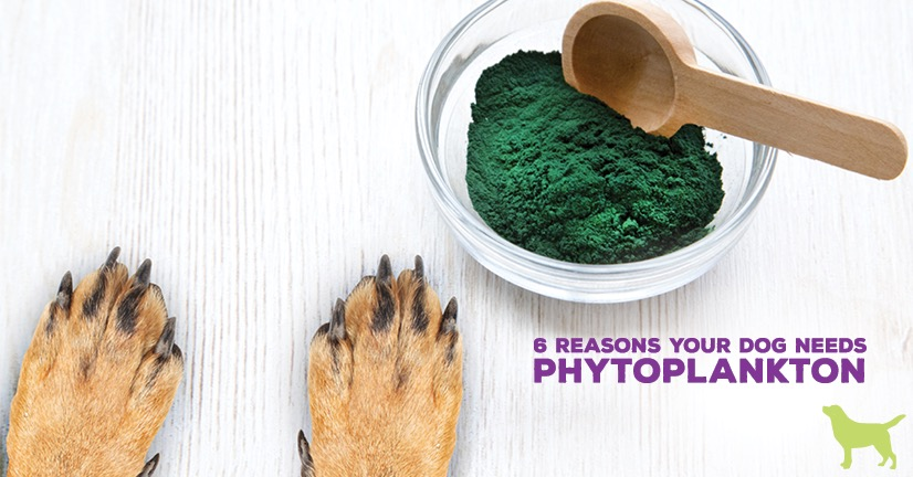 6 Reasons Your Dog Needs Phytoplankton. Two dog paws reaching for a bowl of phytoplankton