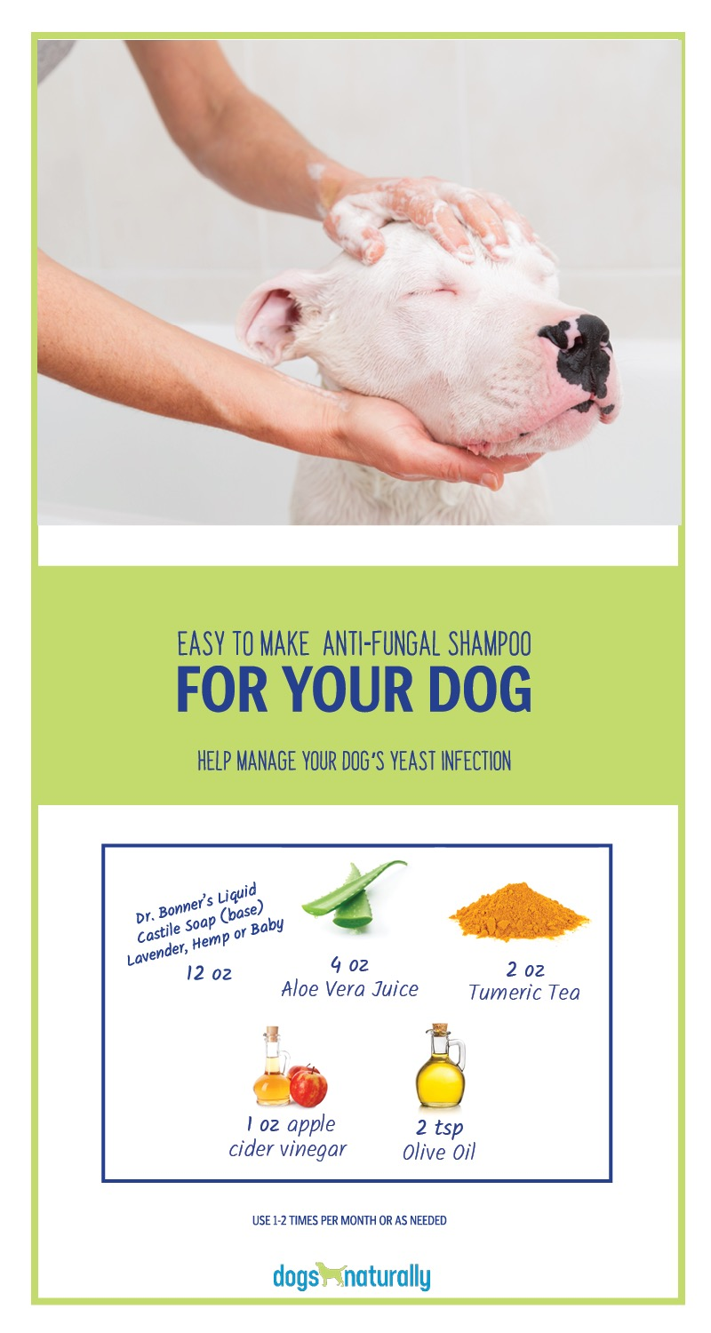 Recipe for making anti-fungal shampoo for your dog