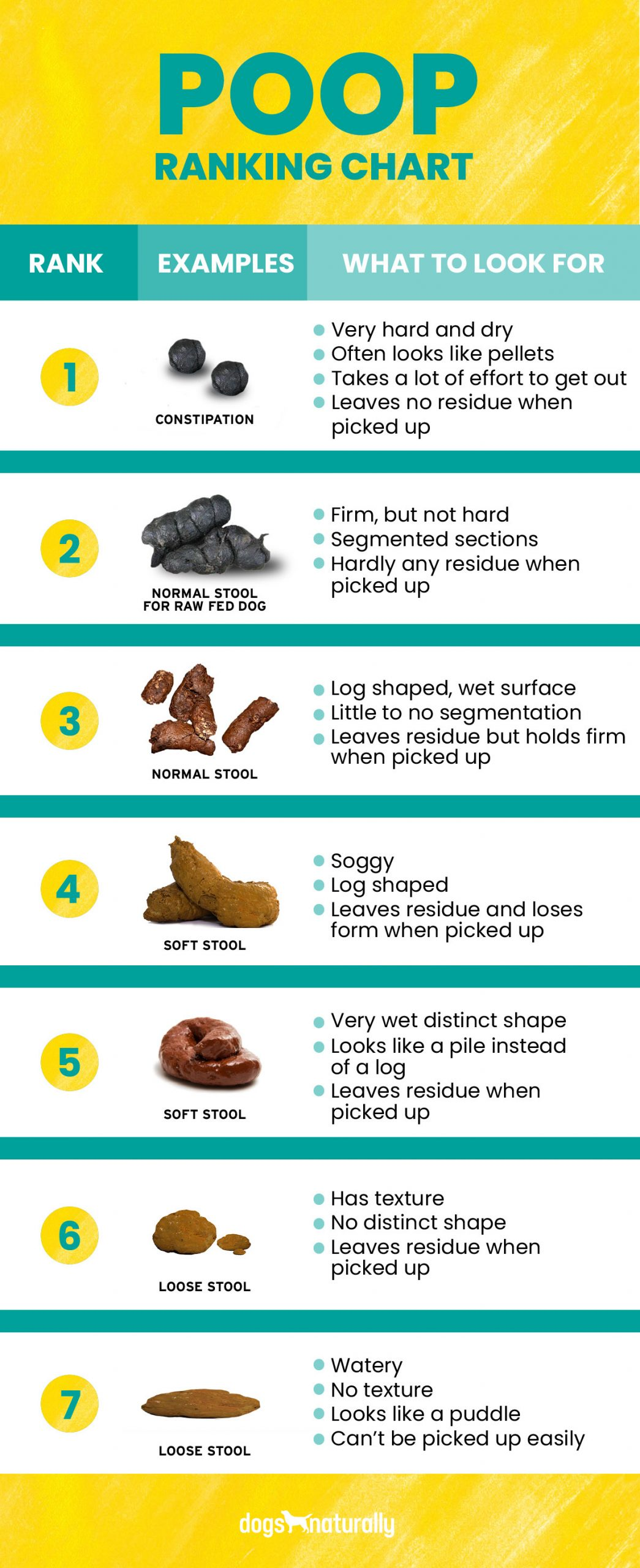 How to stop dog diarrhea poop ranking chart:1. Constipation Often looks like pellets Takes a lot of effort to get out Leaves no residue when picked up   2. Normal stool for raw fed dogs Firm but not hard Segmented sections Hardly any residue when picked up  3. Normal stool  Log shaped, wet surface Little to no segmentation Leaves residue but holds firm  when picked up  4. Soft stool Wet and soggy Log shaped Leaves residue and loses form when picked up  5. Soft stool Very wet distinct shape Looks like a pile instead  of a log Leaves residue when  picked up  6. Loose stool Has texture  No distinct shape Leaves residue when  picked up  7. Loose stool Watery No texture Looks like a puddle Can't be picked up
