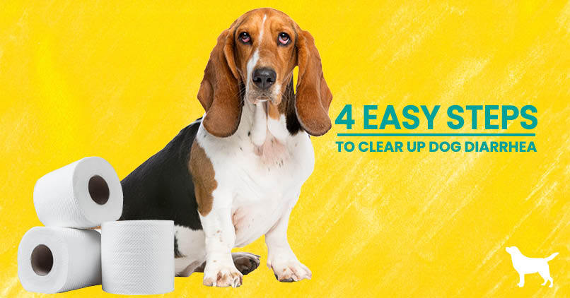 A basset hound sitting with toilet paper rolls
