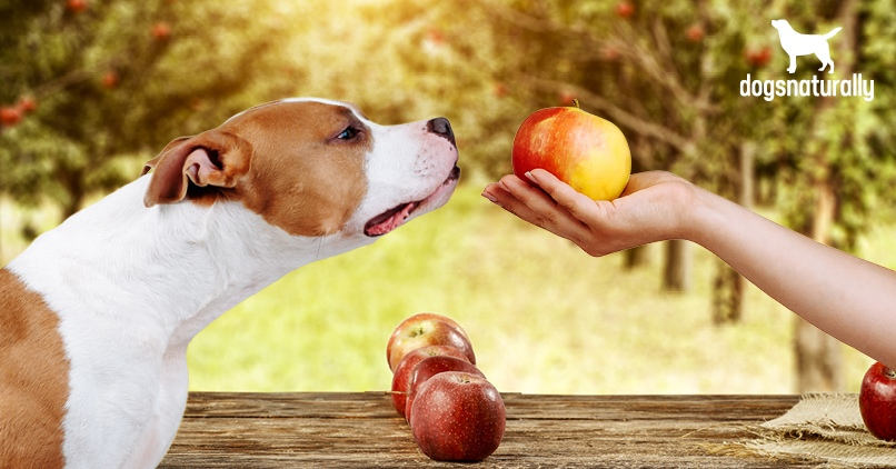 Feed an apple to a dog