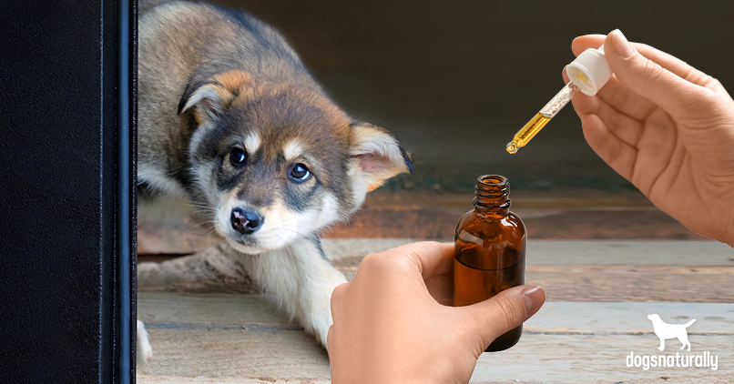essential oil recipes for scared puppies