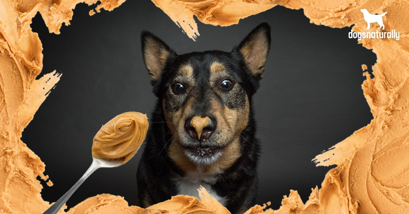 Can Dogs Eat Peanut Butter? Here Are 5