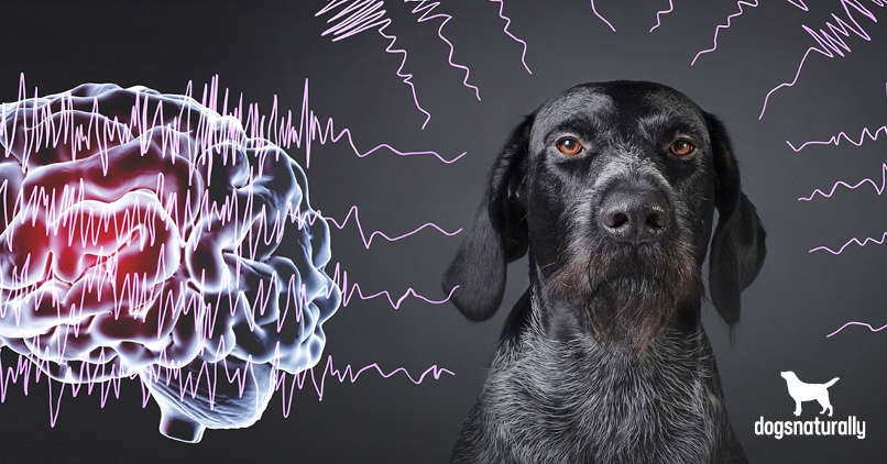 Is Your Dog S Idiopathic Epilepsy Caused By His Food Dogs Naturally