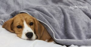 weighted blanket for dogs