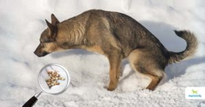 How To Get Rid Of Bladder Stones In Dogs