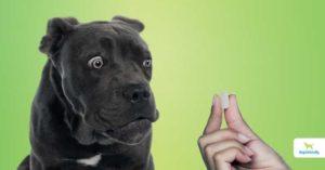 Why Dog Allergy Medications Aren't Safe
